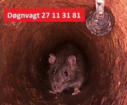 rotter og tv inspektion