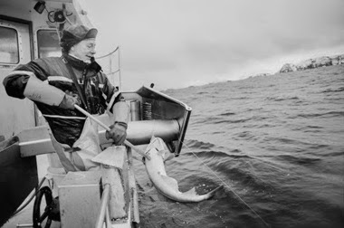 Local attitudes towards wildlife management strategies, ecosystem services and ocean health is important, being local fishermen from Northern Norway. Photo: Nicolas Nèreau