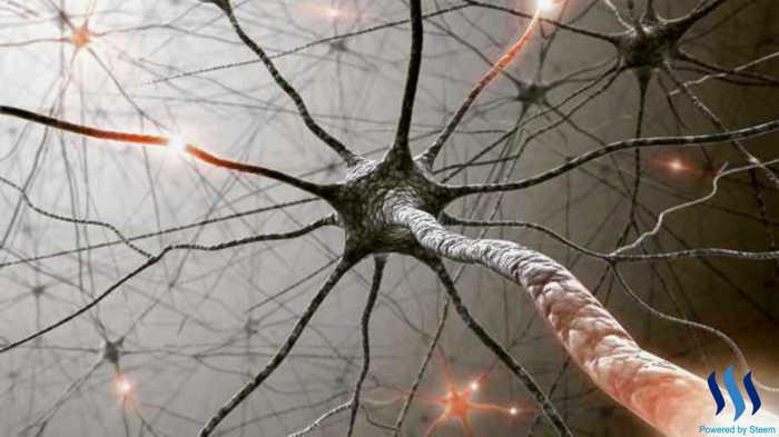 free-nerves