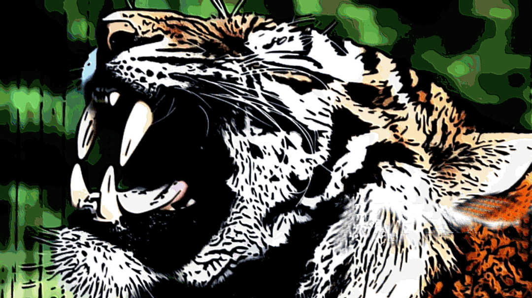 Tigers Tooth