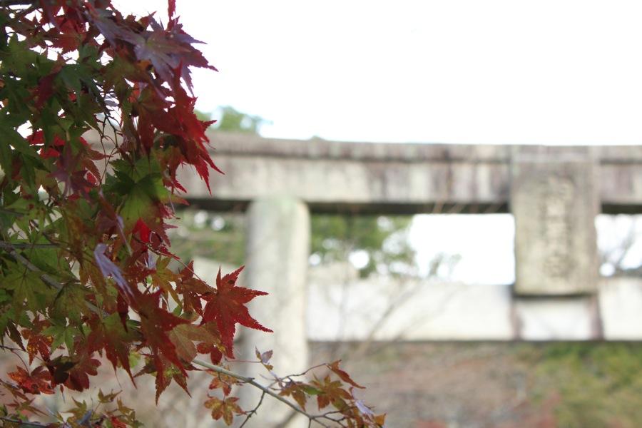 到了神社入口,開始參觀紅葉