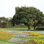 一面一款花也好,但多彩色的花園也很吸引。