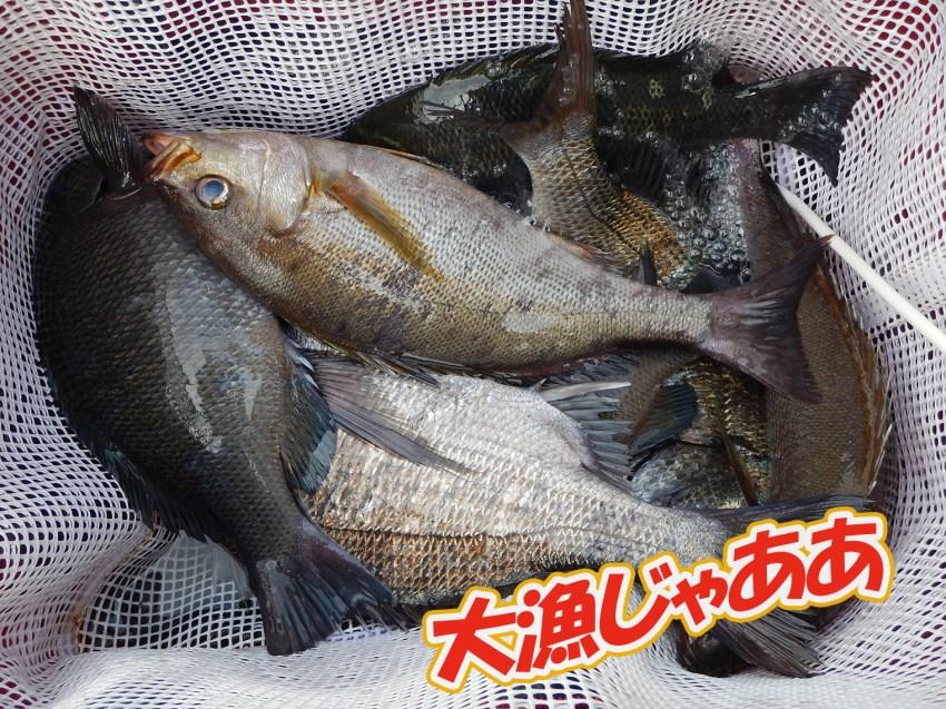 佐賀県唐津市鎮西町馬渡島での大波止における釣果。 大満足。