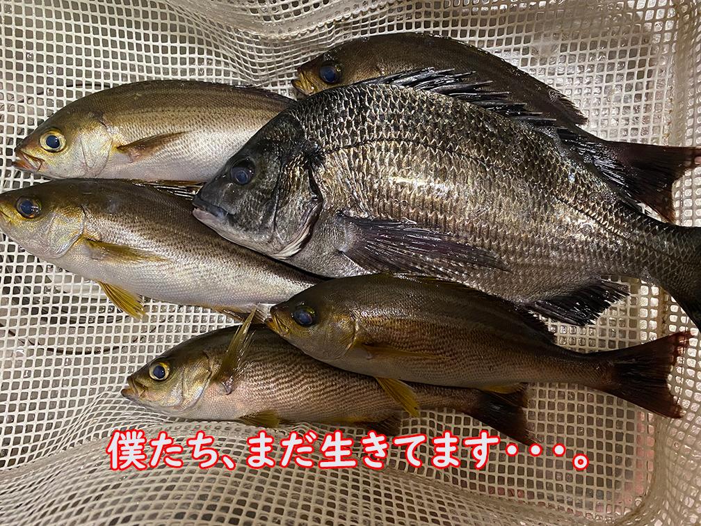 津本式ってご存じかな?魚の処理方法なんだが。