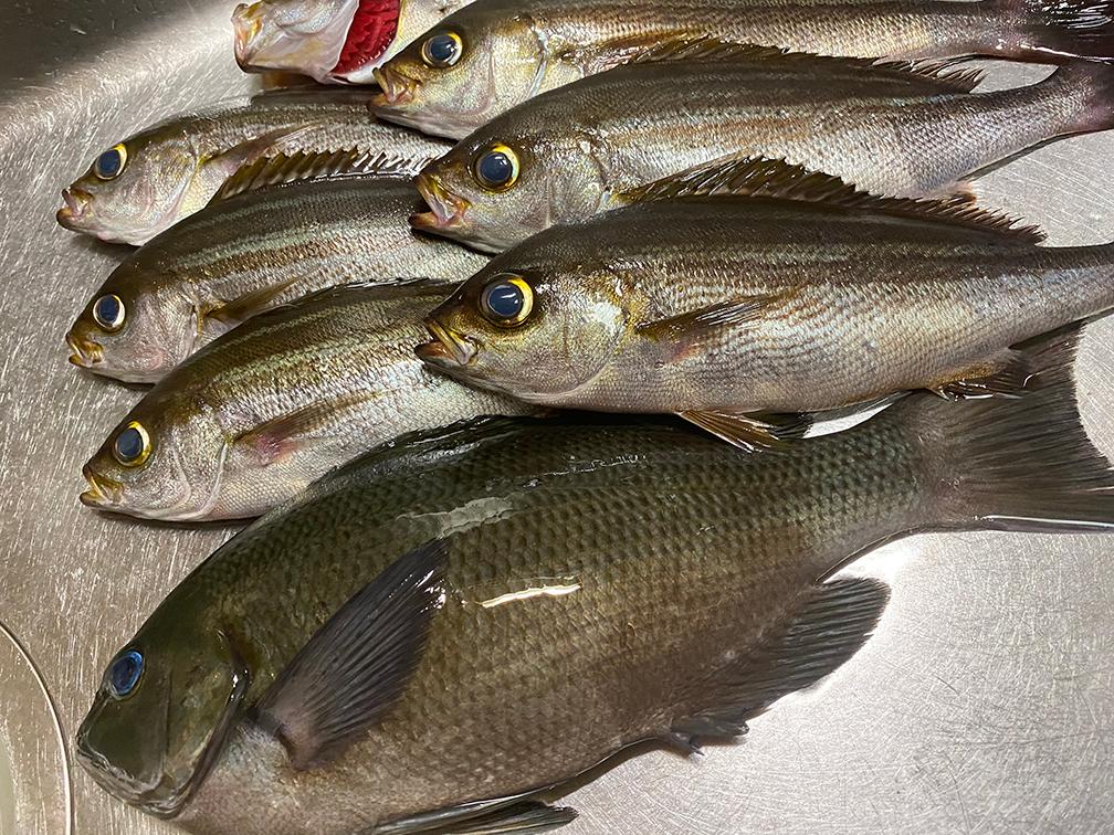 釣れた魚たちは全て食べつくそう!