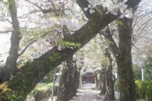 所沢 中氷川神社