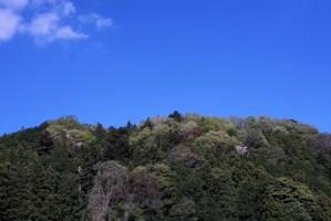 新緑 青空