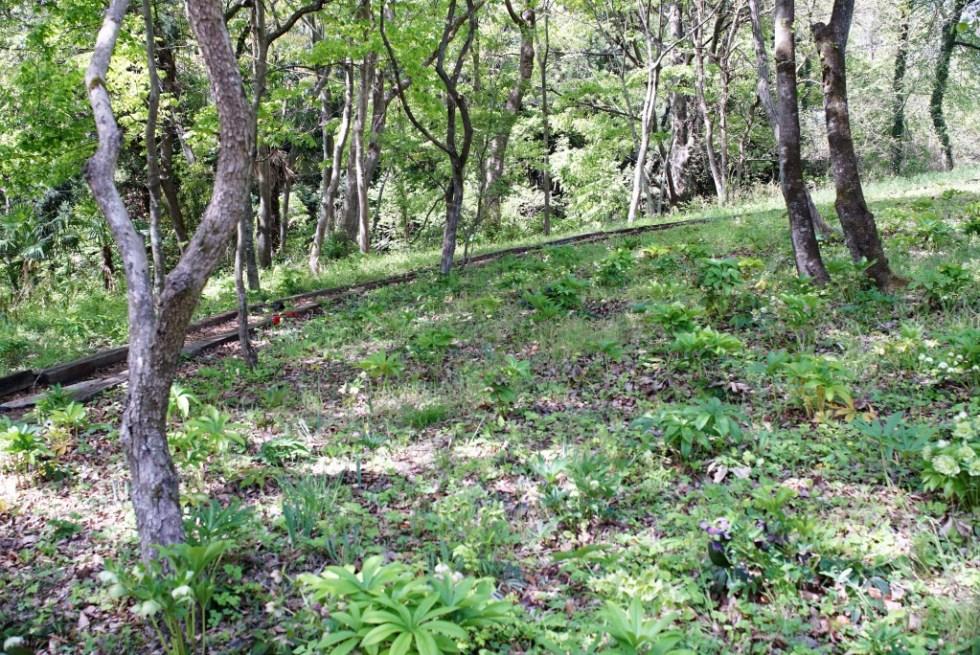 羊山公園 こもれびの庭