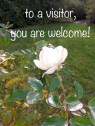welcome rose