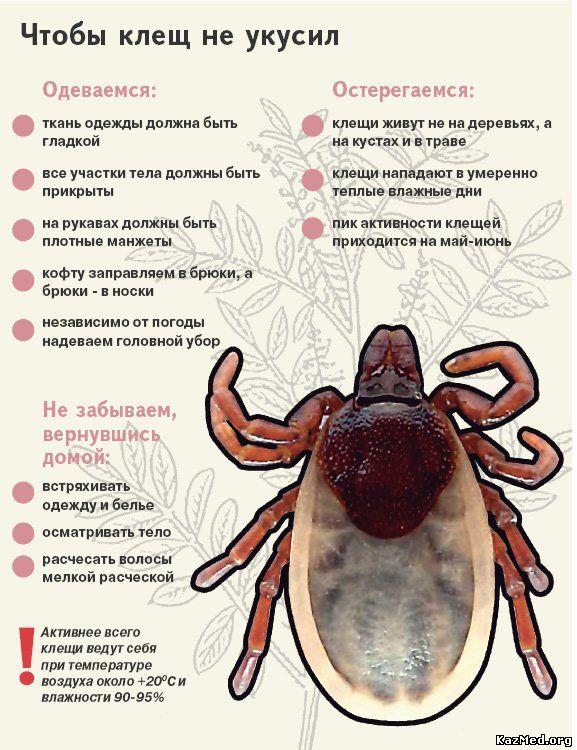 Узнайте по этим симптомам, что Вас укусил клещ