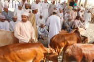 Oman 2012 429.JPG
