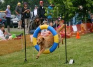 16 Sheep-Dog-Trials-in-Kingston-1-torontofunplaces.com.jpg