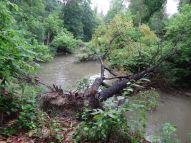 Des arbres vieux de 250 ans se sont écroulés à cause des violentes tempêtes ces derniers temps02.JPG