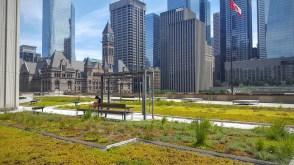 Le toit vert de l'Hôtel de Ville de Toronto. (Photo: Nathalie Prézeau)