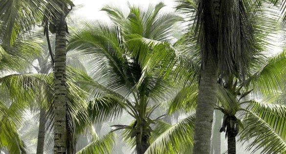 forêt climat environnement palmier