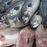 poissons-peche-victoria-reay