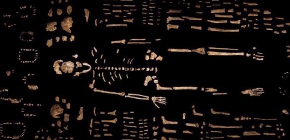 Ossements et dents d'Homo naledi.