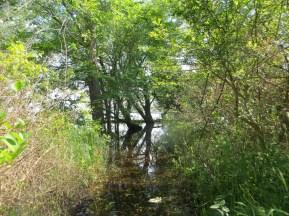 Des boisés en bordure du lac sont transformés en marais. (Photo: Martine Rheault)