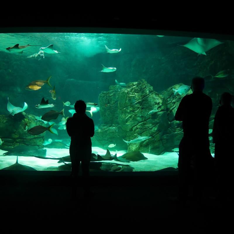 Observation des poissons