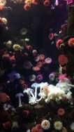 Des fonds marins très colorés