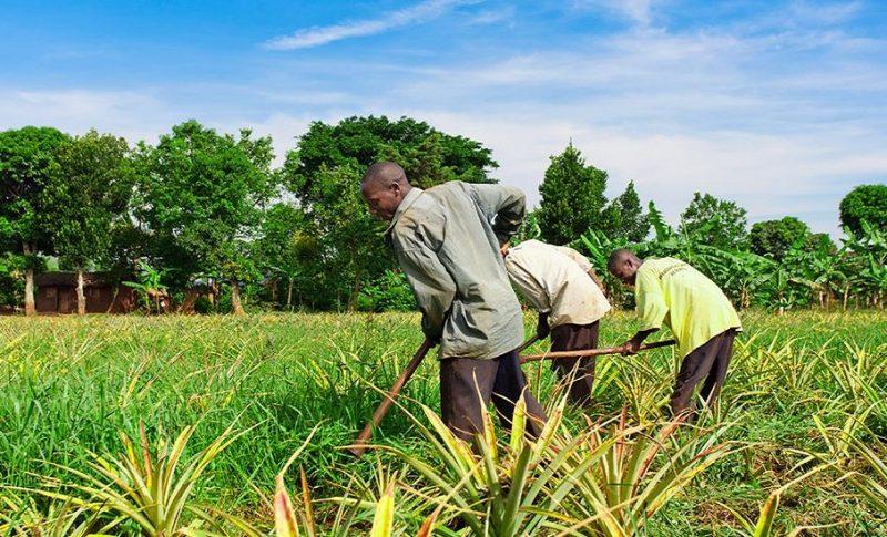 Agropole de Kara le Togo à l'école coréenne pour réduire la pauvreté au niveau national