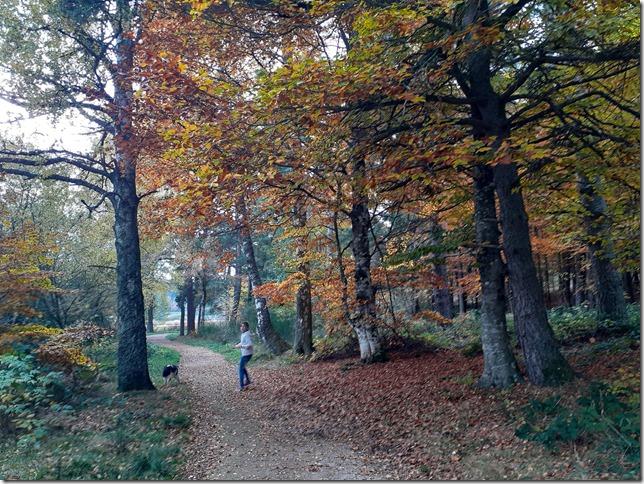 promenade foret