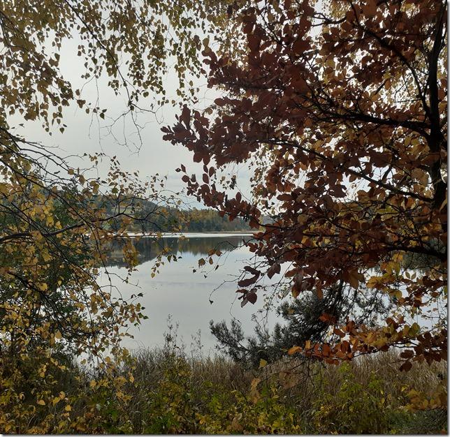lac arbre