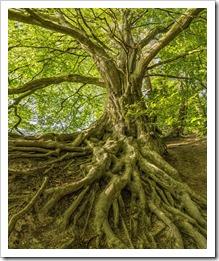 tree-3385957_1280