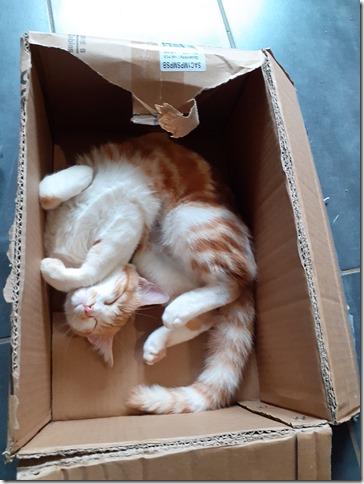 nos amis les animaux chat rigolo dodo carton