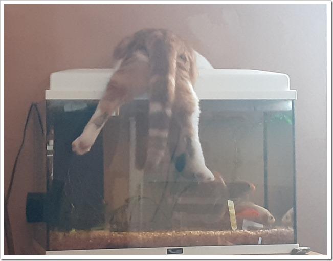 Nos amis, les animaux, nouvelle adoption