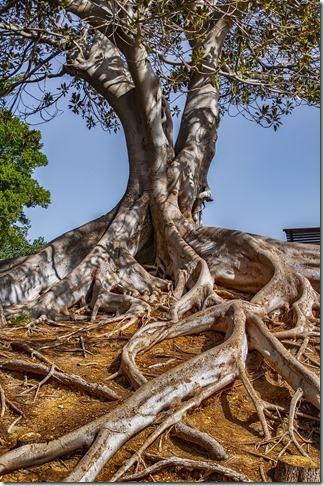 ancrage-énergetique-arbre-tronc-racines-feuilles