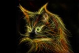 chat  épilepsie