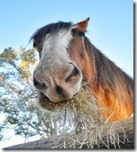 horse-g56d80d7ab_640