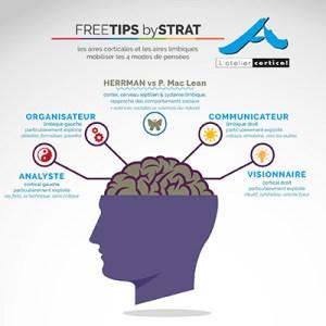 atelier cortical schéma de la pensée stratégique