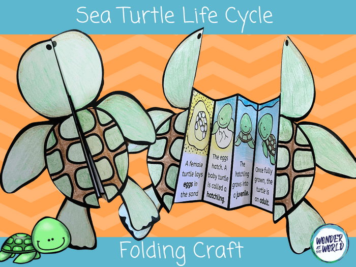 Life Cycle Of A Turtle Craft Teaching Resources