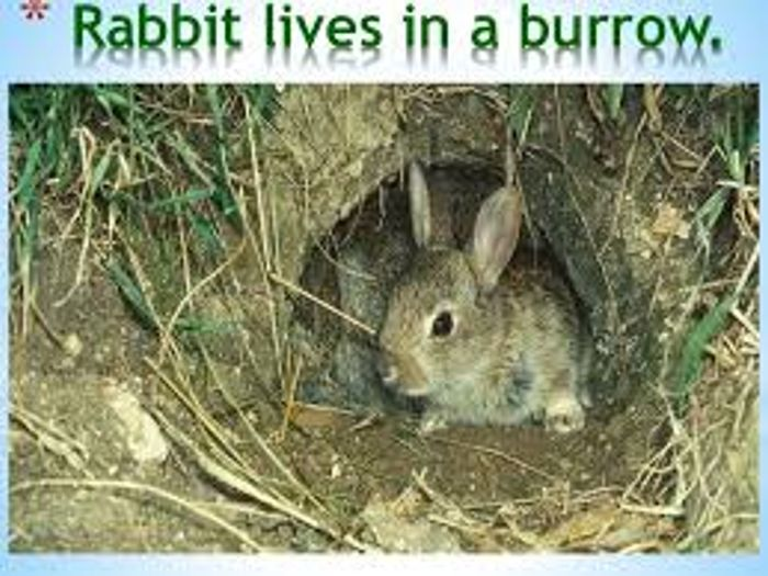Animals And Their Homes Teaching Resources