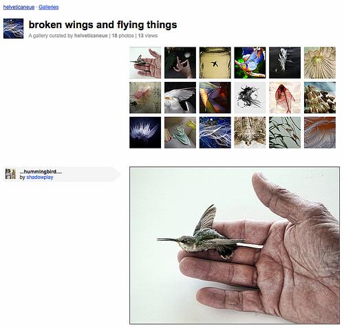 """Galerie """"broken wings and flying things"""" ausgestellt von helveticaneue"""