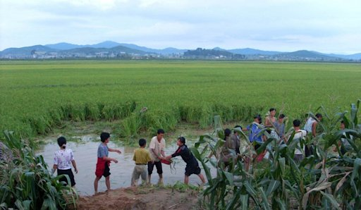 North Korean farmers work in the fields flooded by torrential rains in South Pyonan province, on September 10, 2010