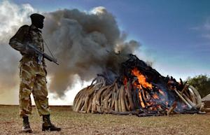 File photo shows a Kenya Wildlife Services (KWS) officer …