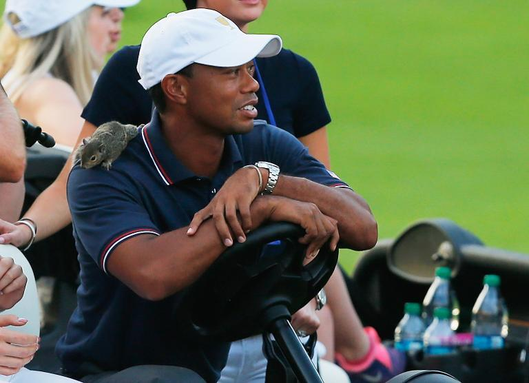 A squirrel is seen on the shoulder of Tiger Woods during the Day One Four-Ball Matches at the Muirfield Village Golf Club on October 3, 2013, in Dublin, Ohio