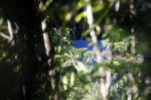 Tnt is seen in the woods outside a suspected human…