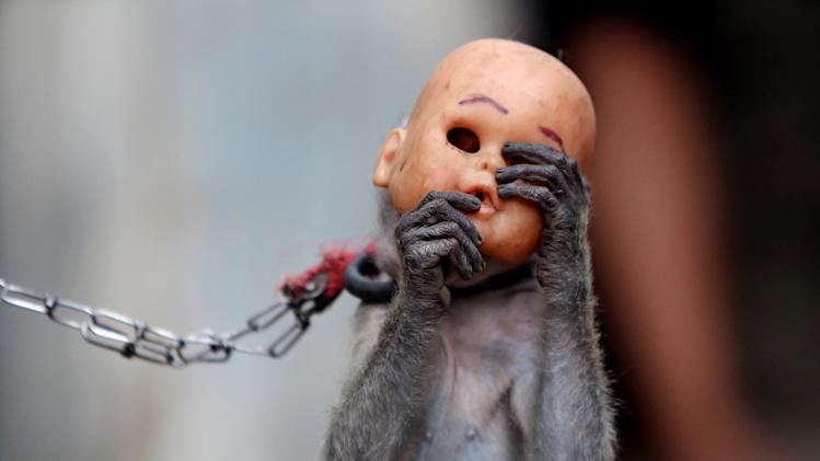 In this photo taken on Thursday, Oct. 24, 2013, a street monkey wears a baby doll mask as it performs in a slum in Jakarta, Indonesia. Security forces are fanning out across Jakarta conducting raids to rescue macaques used in popular street masked monkey performances in a move aimed at improving public order and preventing diseases carried by the monkeys. (AP Photo/Tatan Syuflana)