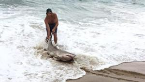 Men Catch Shark on North Carolina Beach as String of …