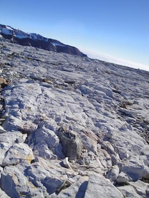 Weird Forests Once Sprouted in Antarctica