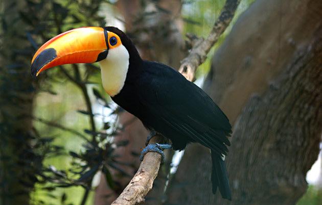 Greenpeace é uma das ONGs que luta para a preservação da Floresta Amazônica.