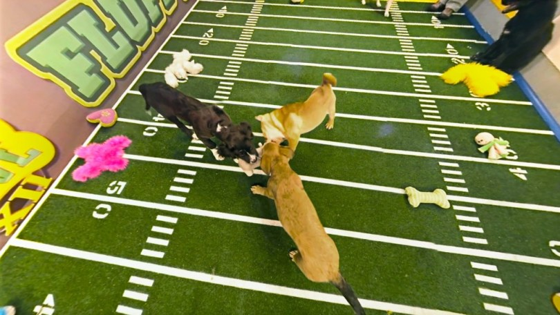 puppy-bowl-vr-discovery6