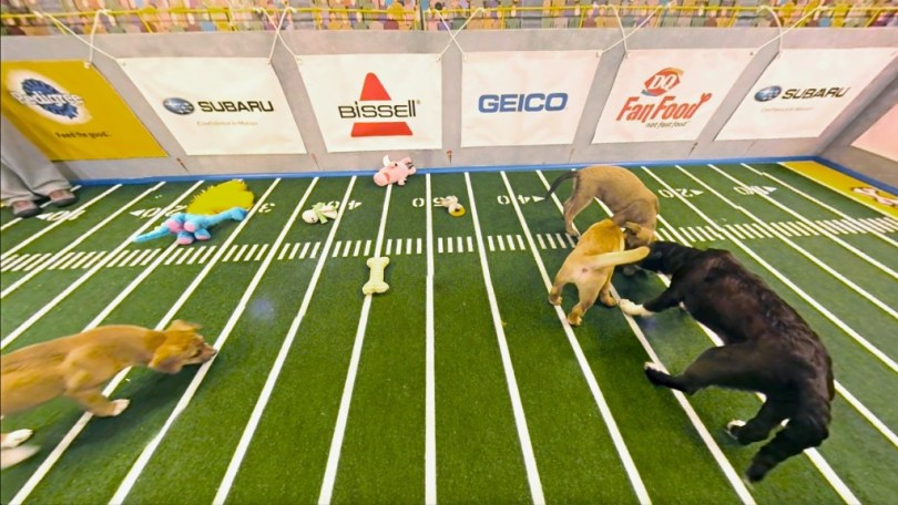 puppy-bowl-vr-discovery7