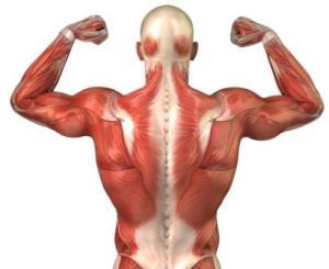 мышечный корсет - единственный выход для зоровой спины