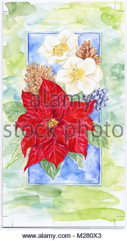 Watercolor Flowers Poinsettia Illustration Of Botanical
