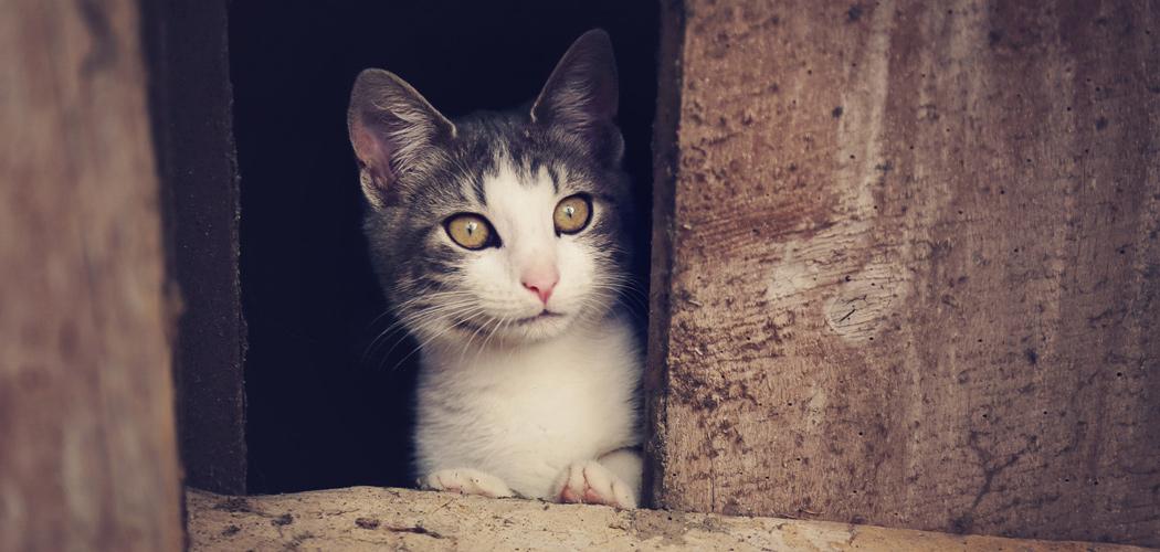 Katze | Foto: © mariesacha - Fotolia.com